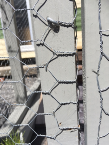 What is a catio / cat enclosure? - Little Miss Cat