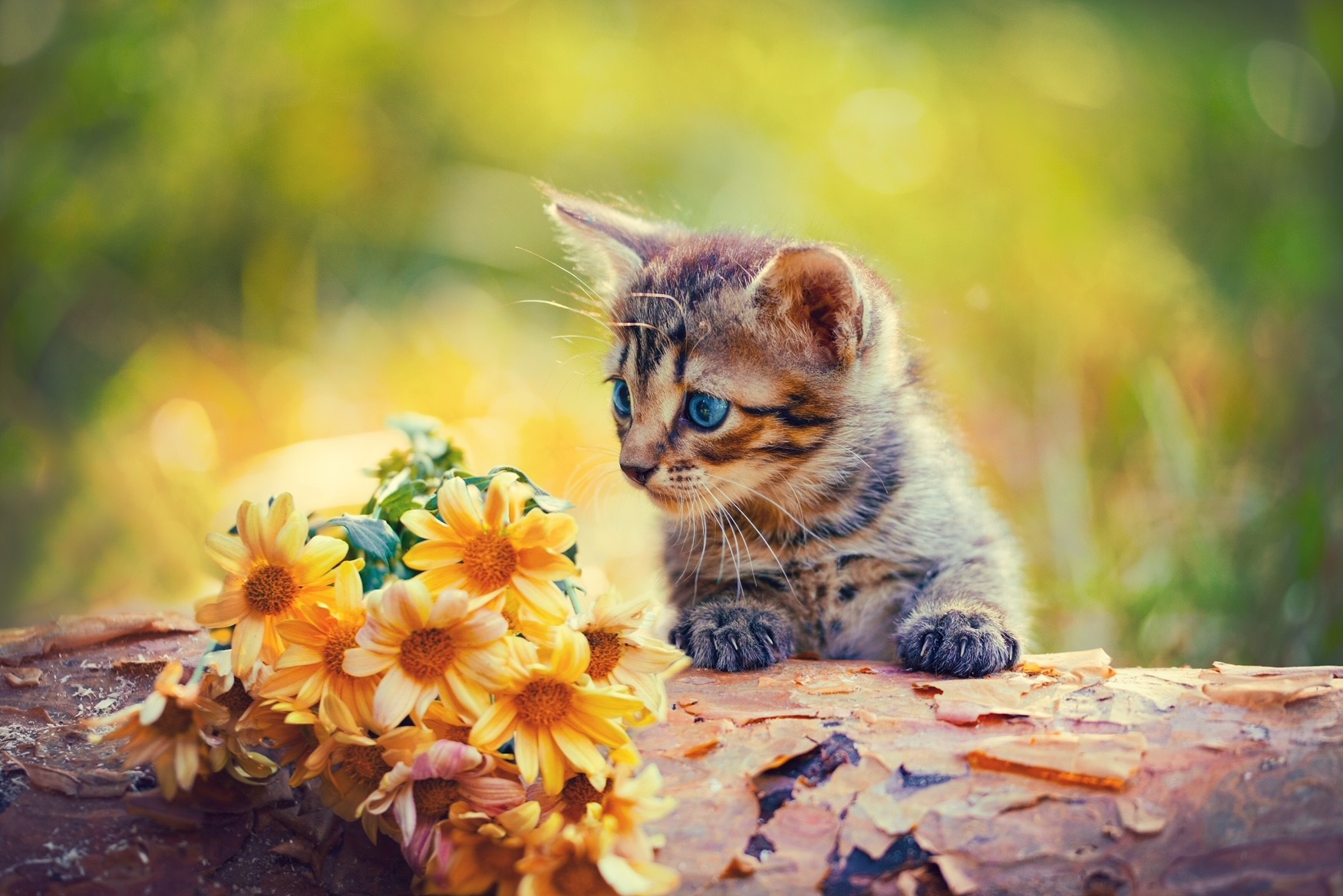 Bach Rescue Remedy for Cats – and other useful Flower